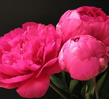 Love My Peony - set of two by Gloria Abbey