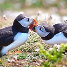 Married Bliss (Atlantic Puffins) by Krys Bailey