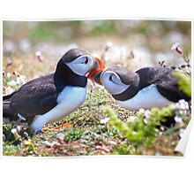Married Bliss (Atlantic Puffins) Poster