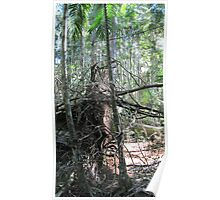 Uprooted Tree, Mary Caincross Rainforest, Blackall Range. Qld. Poster