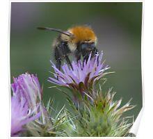 mmmmm nectar Poster