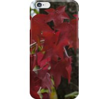 Autumn's annual fashion show iPhone Case/Skin