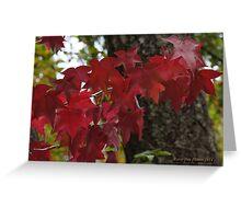 Autumn's annual fashion show Greeting Card