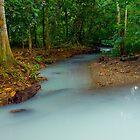 Magical Mayan Jungle River by Zane Paxton