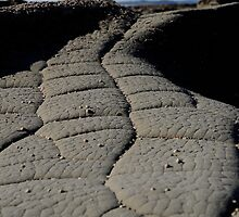 Crocodile skin...... not really, it's just rock! by Laura Mitchell