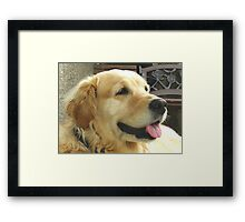 It's too warm for me !  Framed Print