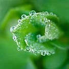 water is a thing of beauty gleaming in the dewdrop... by Natalia Campbell
