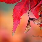 Shades of Fall by Chris Armytage™