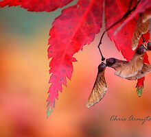 Shades of Fall by Chris Armytage™