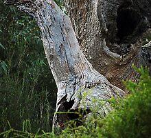 Confronted  by an emu at Braeside Park. by Bernard (Ben)  Bosmans