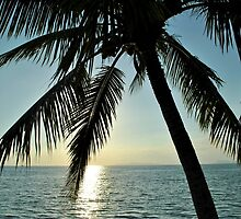 Palm Tree - Thailand Sunset by nmotton