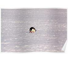 Gentoon Penguin Poster