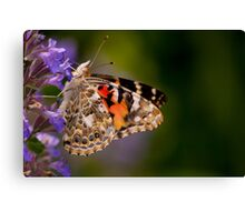 Red Admiral Butterfly in the Heather Canvas Print