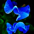 Blue Petals by Annette Carr