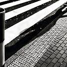 ZEBRA | walking by Frank Waechter
