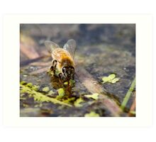 Replenishing at the Water Hole Art Print