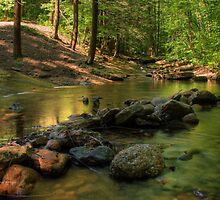 Looking Up Stream by Aaron Campbell