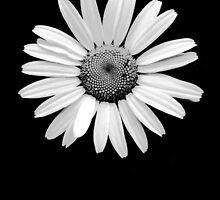 Flower by alexa20