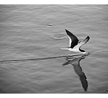Black Skimmer by Greg Riegler