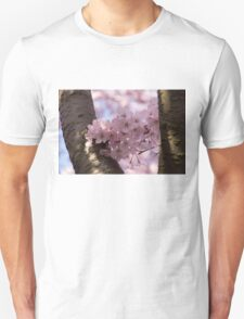 Silver Bark and Pink Blossoms T-Shirt