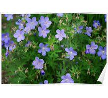 Pretty Little Flowers Poster