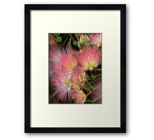 Mimosa Explosion Framed Print