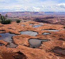 Desert Rain Puddles by CarolM