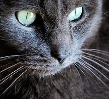 Kitty 2 by alexa20