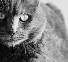 Kitty 3 by alexa20