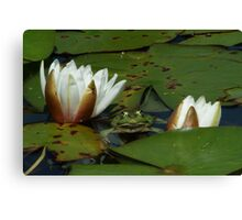 an afternoon with Lily Canvas Print
