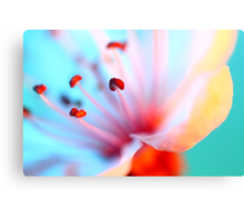 Blossom In Blue Canvas Print