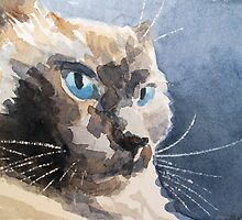 Ari, a cat by Sharon Williamson