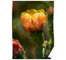 Prickly Pear Cactus and Green Spider Poster