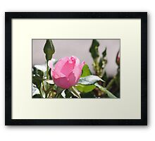 Pinky. Framed Print
