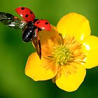 Flight Of The Ladybird by snapdecisions