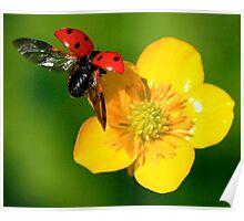 Flight Of The Ladybird Poster