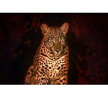Night spots Photographic Print