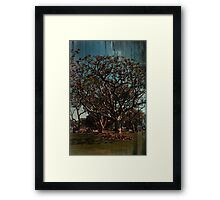 Check With The Sun Framed Print
