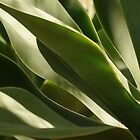 Cacti Leaves by Martha Andreatos