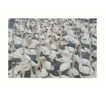 Swans. Art Print