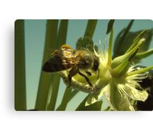270 Bumble Bee Canvas Print