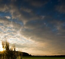 Barley Sunset! by David  Howarth