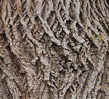 Tree bark, doesn't bite by Josef Pittner