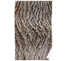 Tree bark, doesn't bite Poster