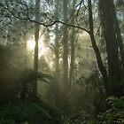 Winter Rays by Bel Jones
