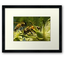 271 Bumble Bees Framed Print