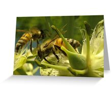 271 Bumble Bees Greeting Card