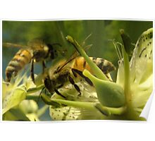 271 Bumble Bees Poster