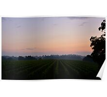 Sunrise on French vineyard Poster
