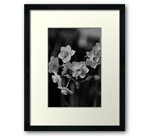 Jonquil - Family Ties Framed Print